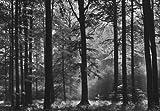 Foto-Tapete / Wandbild, Motiv 'Avalon Wald' Schwarz/Weiß