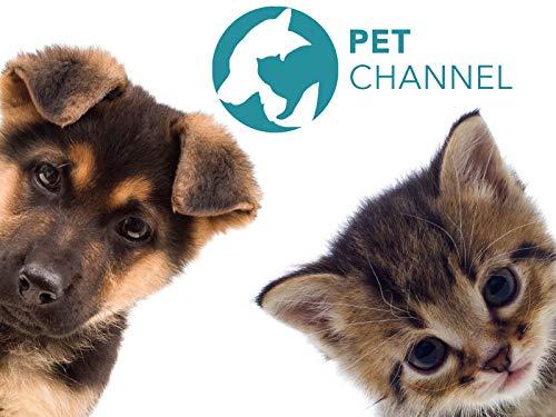 Pet Channel