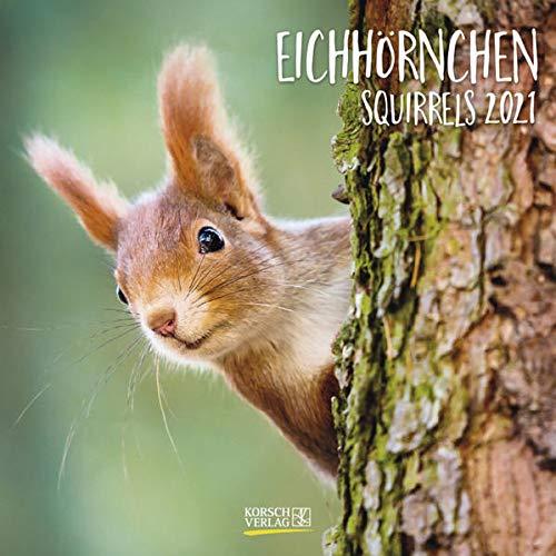 Eichhörnchen 2021