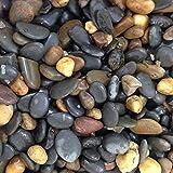 allpondsolutions Galets de Gravier de Couleur Naturelle 1 à 2 cm Brillant Brillant 2...