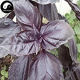 Samen-Paket Nicht Pflanzen: Stück: Kaufen Lila BasilSeeds Seed Ocimum Basilicum Für Rüschen Luo Le
