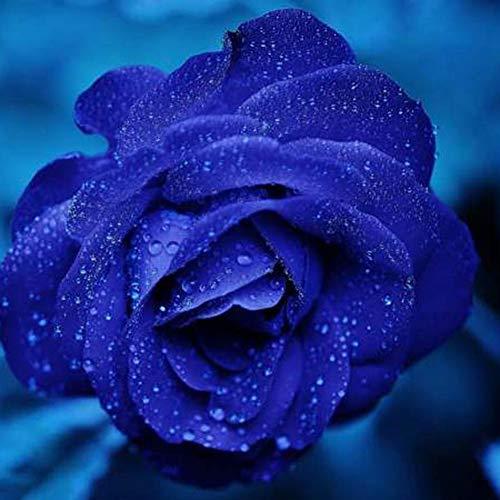 Luo-401XX 40 Piezas De Semillas De Flores Color De Rosa, Bonsai Fragan