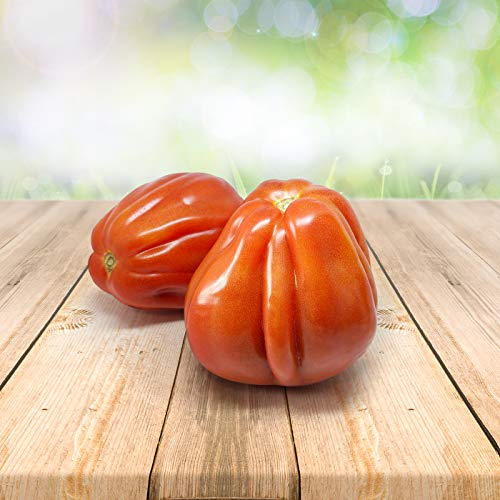"""Tomate""""Bullenherz"""" 25 x Samen aus Portugal 100% natürlich Aufzucht/Massenträger ideal für Suppen und Salat"""