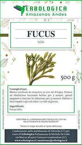 Alga fucus tallo 500 grammi   Tisana depurativa con alga fucus   Ottimo integratore per aumentare le...