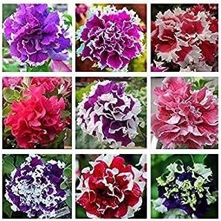 ASTONISH SEEDS: 1: 200pcs / bag colgantes multicolor Petunia semillas de la planta en maceta de Bonsai Balcón Petunia que...