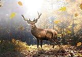 wandmotiv24 Carta da parati Cervi nella foresta d'autunno XL 350 x 245 cm - 7 pezzi Carta da parati fotografica, murale, carta da parati a motivi, carta da parati in tessuto non tessuto M5731