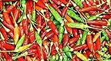 MABES WAREHOUSE Thai Garden Bird Hot Pepper 30 Seeds - Capsicum Annuum, Extremely Hot Ornamental Pepper Plant Seeds, Hot Pepper Seeds for Planting, Vegetable Seeds for Planting Home Garden