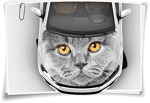 Medianlux Katze Augen Motorhaube Auto-Aufkleber Steinschlag-Schutz-Folie Airbrush Tuning Car-Wrapping Luftkanalfolie Digitaldruck