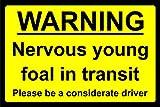 Señal de Advertencia de Seguridad con Texto en inglés Nervioso Joven Potro en tránsito - Señal de Aluminio de 3 mm, 400 mm x 300 mm
