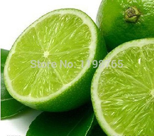 100pcsPromotion! 5 packs, 10 graines / paquet, graines de citron intérieur, extérieur, graines comestibles BONSAï graines vert citron, de la nourriture organique, te