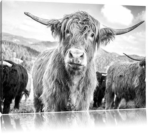 Pixxprint Blick Einer Kuh an der Weide als Leinwandbild   Größe: 80x60 cm   Wandbild   Kunstdruck   fertig bespannt