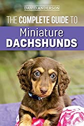 Unique Features About Dachshund Breeds 3