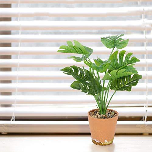 Unknow Monstera Pflanze-Grün