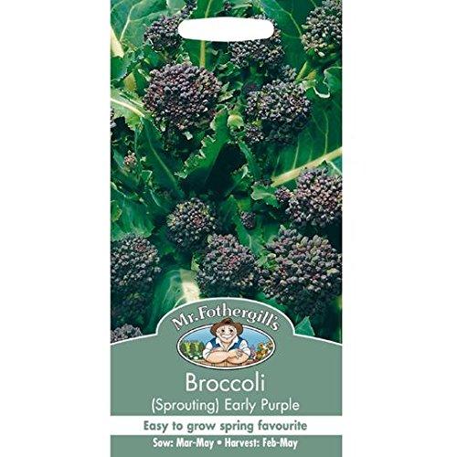 Graines M. Fothergills Broccoli Germination précoce Violet