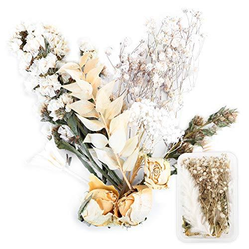 UFLF Getrocknete Blumen Natürliche Trockenblumen Set Gepresste Blumen Blätter für DIY Basteln Harz Kerzenherstellung Scrapbooking Kartendeko