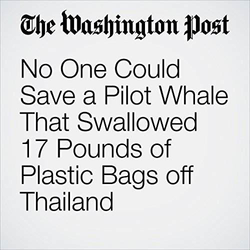 No One Could Save a Pilot Whale That Swallowed 17 Pounds of Plastic Bags off Thailand copertina