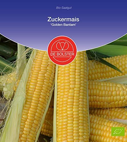 De Bolster Samen Zuckermais \'Golden Bantam\', bewähre Hobbysorte, 3 Packungen Bio-Saatgut (Demeter zertifiziert)