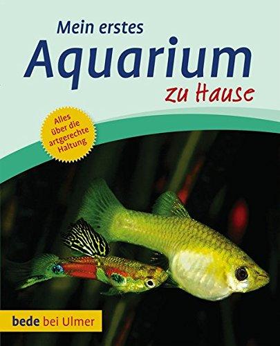 Mein erstes Aquarium zu Hause