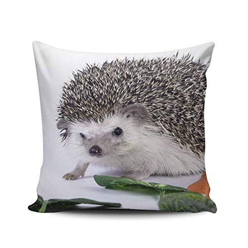 SUN DANCE Funda de almohada decorativa para el hogar con diseño de erizo de doble cara, 45 x 45 cm