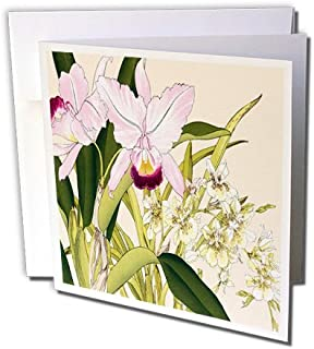 3dRose Light Pink Cattleya Orchids and Light Yellow Oncidium Orchid - Greeting Cards, 6 x 6 inches, set of 6 (gc_175425_1)