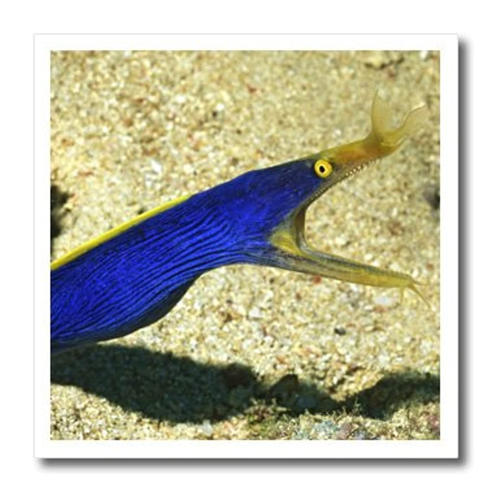 3dRose Blue Ribbon EEL.(Rhinomuraena Quaesita).Fiji-Iron on Heat Transfer, 8 by 8