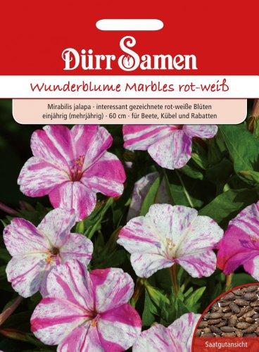 Dürr Samen 1221 Wunderblume Marbles rot weiß (Wunderblumensamen) [MHD 12/2019]