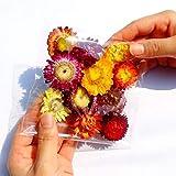 Testa di Fiore di crisantemo colorato Margherita Fiore Naturale essiccato Gambo di Grano Materiale Testa di crisantemo Fiore Reale Composizione di Fiori Fiore Secco Fai da Te Una Borsa di ricch