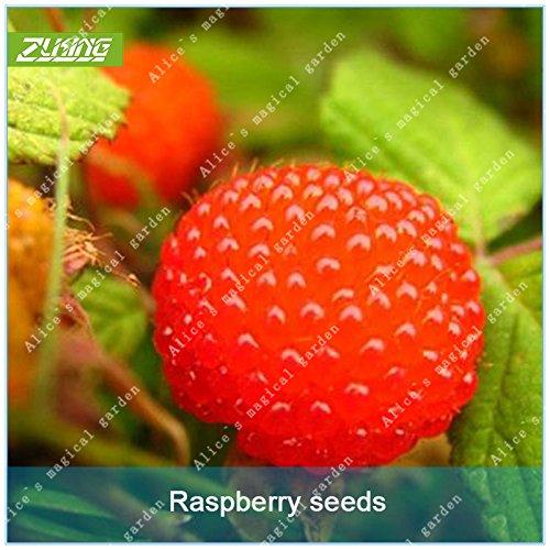 ZLKING 100 Pcs chinoise framboise Arbres fruitiers Graines Bonsai chinoise Phytothérapie santé bio pour fruits épices végétales