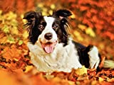 Zoom IMG-1 5d pittura diamante diy cane