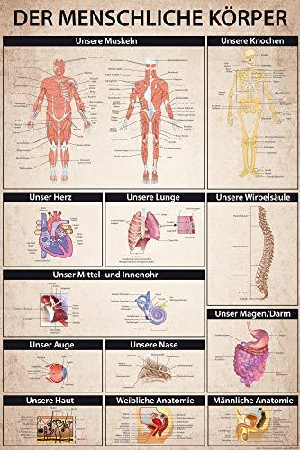 1art1 Der Menschliche Körper - Anatomie, Muskeln Knochen Organe XXL Poster 120 x 80 cm