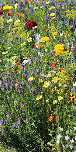 Les Graines Bocquet - Graines De Fleurs Pour Papillons En Mélange - Graines Potagères À Semer - Sachet De 3Grammes