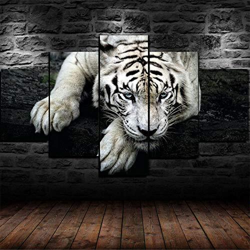 QIQIGUAI-Cuadro En Lienzo Imagen Impresión-Póster Animal Depredador Tigre Blanco-Pintura Decoración Canvas De 5 Pieza Mural Moderno Decor Hogareña con Marco 100X55Cm