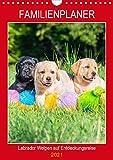 Familienplaner - Labrador Welpen entdecken die Welt (Wandkalender 2021 DIN A4 hoch)