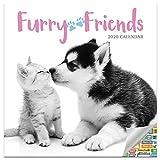 Furry Friends Kalender 2020 Set – Deluxe 2020 Tier Babies Wandkalender mit über 100 Kalenderaufklebern für Haustierliebhaber, Bürobedarf