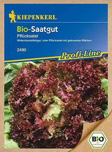 Pflücksalat Lollo Rossa Bio - Saatgut