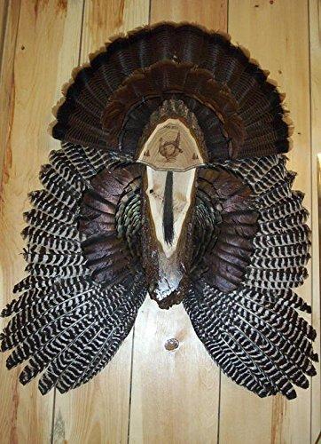 Turkey Fan Plaque/Turkey Mounting Kit/Turkey Hunting Turkey Fan and Beard Mount/Turkey Fan Mount And Display Kit/One Of A Kind Turkey Fan Mount Turkey Fan And Wing Mount