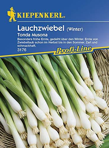 Lauchsamen - Lauchzwiebeln Tonda Musona (Winter) von Kiepenkerl