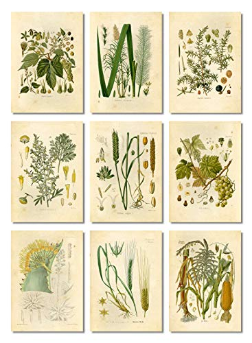 Ink Inc Botanical Prints Alcohol Vintage Wall Art - Corn Whiskey, Hops Barley Beer, Wheat Vodka, Grapes Wine, Juniper Gin, Sugar Cane Rum, Agave Tequila, Wormwood Absinthe - Set of 9-5x7 - Matte