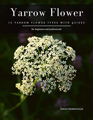Yarrow Flower: 13 Yarrow Flower Types with guides
