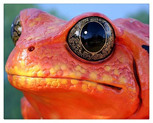 Pintar Por Numeros Adultos Pintura Al Óleo Sobre Lienzo Niños Con Pinceles Y Pigmento Acrílico De 40X50Cm (Marco De Madera) - Cara De Rana Reptil Color