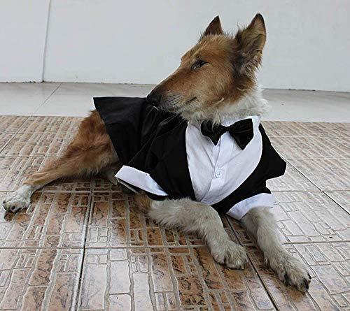 Yongqin Traje de boda para perro, disfraz de esmoquin para perro...