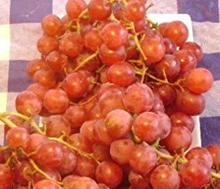 bare root grapes for sale