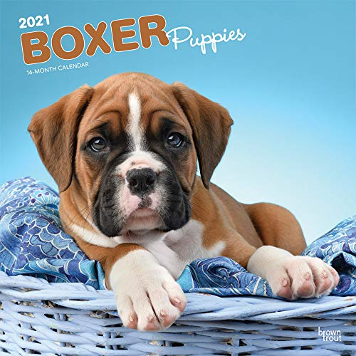 Boxer Puppies 2021 12 x 12 Inch Monthly Square Wall Calendar, Animals Dog Breeds Puppy (English, Spanish and French Edition)