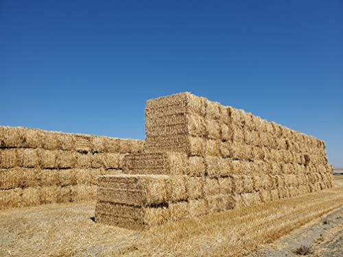Premium 100% Natural Wheat Straw Grass Harvested 2020, Full Bale (25lbs.) Farmer Direct- Excellent Animal Bedding, Garden Cover, Mulch and Farm Wheat Straw