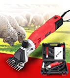 Cattle Clippers