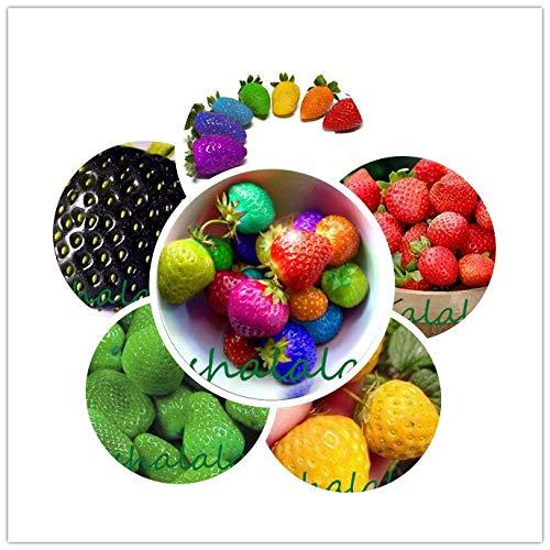 Fragola Bonsai, pianta rampicante Fragola, Fragola Dolce Multi Colore, impianto di Frutta Biologica, per la casa Giardino, 200pcs / Bag: Mixed