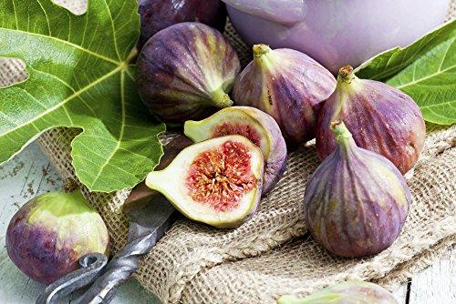 Ficus carica Brown Turkey - Feigenbaum - essbare Früchte - verschiedene Größen (120-140cm Stamm 60cm Topf 12 Ltr.)