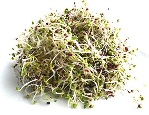 100 g BIO Keimsprossen Pak Choi (Chinesicher Senfkohl) Samen für die Sprossenanzucht Sprossen Microgreen Mikrogrün