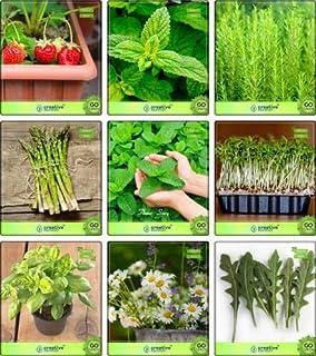 Jardin Cuisine ext/Ã/©rieure plantez des graines semences Pinkdose menthe Graines pour le jardinage Herb Semences pour la cuisine de jardin potager Graines de plantes 20Indoor