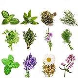kit erbe aromatiche 240 semi in 12 varietà, collezione 1, più piccola guida alla coltivazione